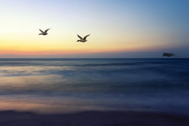 sea-coast-water-nature-ocean-horizon-805268-pxhere.com